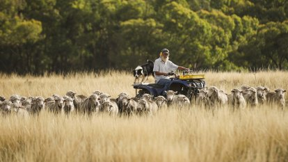 Looming soil carbon policy could disadvantage the best farmers