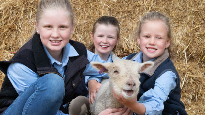 A big hit on EweTube: sisters star in Show's virtual sheep contest