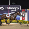 Inter Dominion favourite King Of Swing wins the Miracle Mile last year.