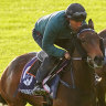 Derby favourite Young Werther on target despite lack of experience