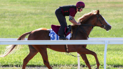 Il Paradiso could be Cox Plate horse, says Brae Sokolski