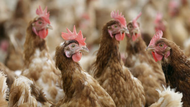 Farm Pride Foods has had to destroy 380,000 hens, or 33 per cent of its flock, because of a bird flu outbreak.