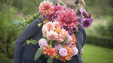 The Land Gardeners gathering dahlias in the early morning.