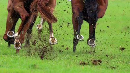 Quirindi trainer disqualified from racing for taking horse to knackery