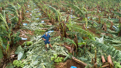 Banana prices expected to rise after $180m damage to Qld crops