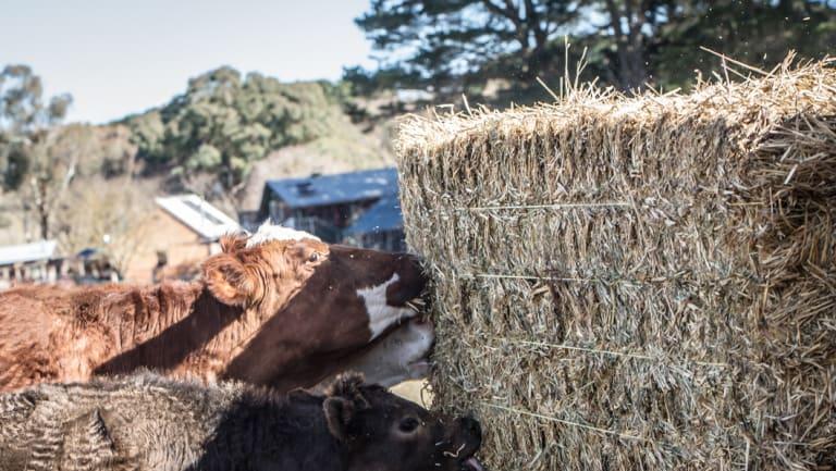 hay stock getting very light australian fodder industry association