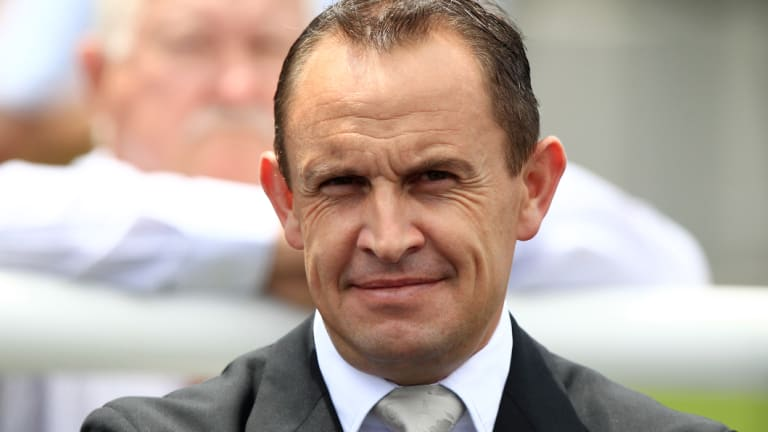 Tested: Chris Waller believes the Altrenogest ban will not stop  his mares racing in Melbourne during the spring canrival