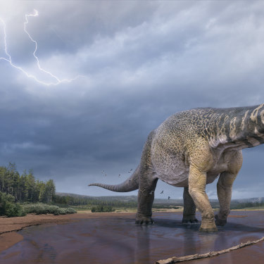 Australotitan cooperensis is the largest dinosaur ever found in Australia. Experts believe it must have had a connected predator species.