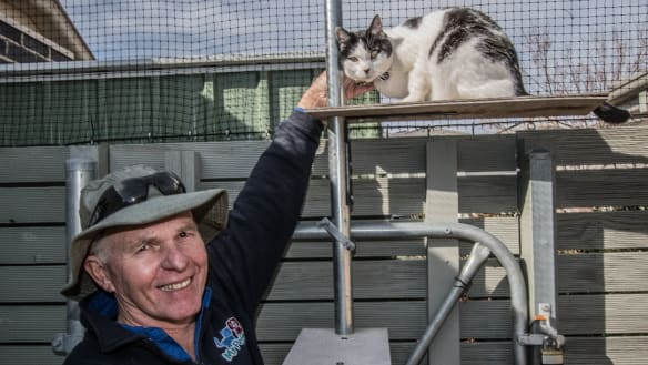 Cat containment in effect across more Canberra suburbs