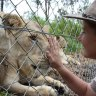 Lions that attacked zookeeper at Shoalhaven Zoo will not be euthanised