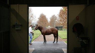 Damion Flower's champion horse Snitzel