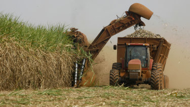 A machine cuts sugar cane on a plantation in Batatais, Brazil.