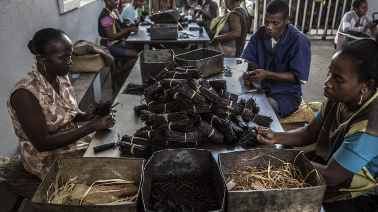 Employees sort cured vanilla at a warehouse owned by Michel Lomone.