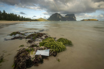 More than a thousand face masks have washed ashore beaches on Lord Howe island.