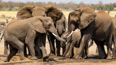 Elephants drink at a waterhole in Kruger National Park, in north-eastern South Africa.