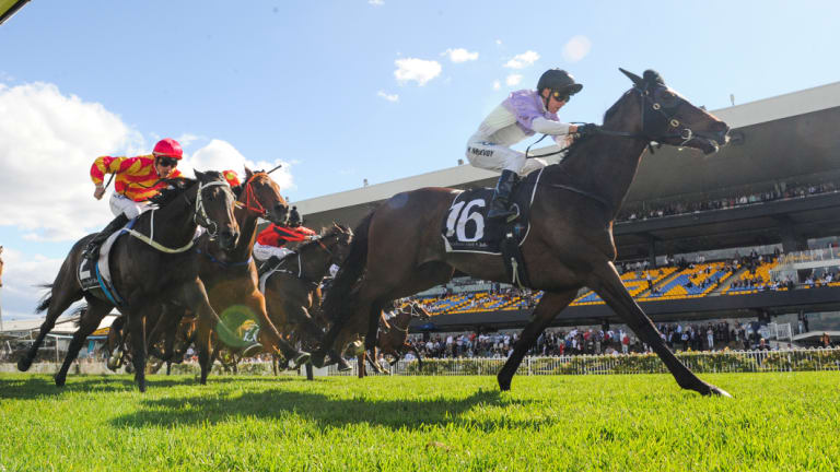 A good to soft track is expected for the nine-race card at Rosehill on Saturday