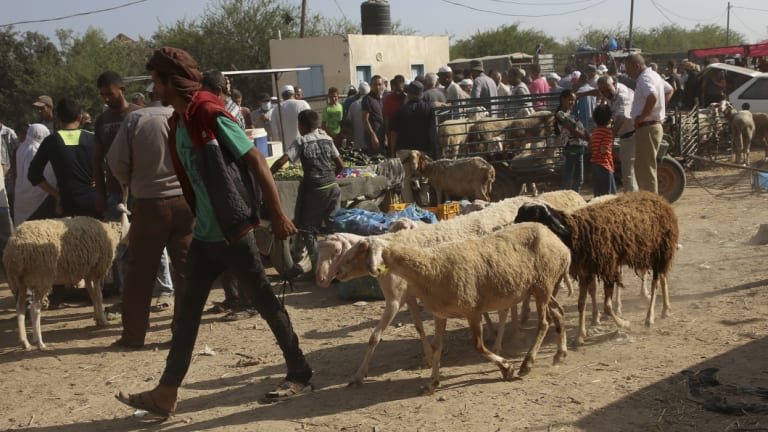 A vendor walks with his sheep at a livestock market in preparation for the upcoming Muslim Eid holiday in Bureij refugee camp, central Gaza Strip.