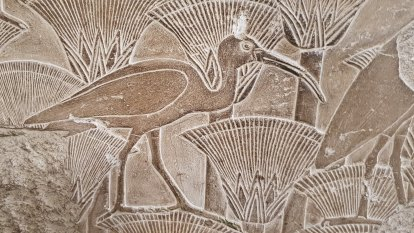 When the bin chicken was a god: new research sheds light on ancient ibis