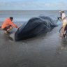 'You couldn't just leave it': Large whale, dead dugong wash up on Qld beaches