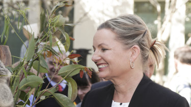 "Environment Minister Sussan Ley said Australia's koala population has taken an ""extraordinary hit""."