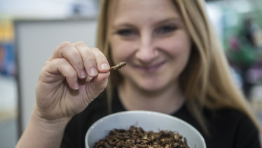 Skye Blackburn, founder of the Edible Bug Shop, samples roast insects.