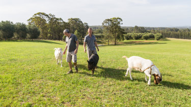 Jeff, left, and Todd take Helga and the goats for a family walk.