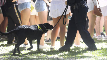 A police officer uses a sniffer dog at a Sydney music festival.