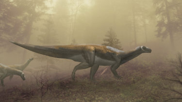 An artist's impression of the prosauropod which likely made the footprints found in the Ipswich mine.