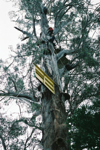 "Activists in ""Gandalf's Staff"", an 85-metre hardwood tree in southern Tasmania's Valley of the Giants."