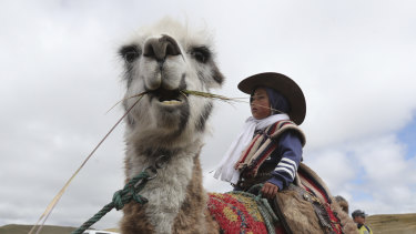 A child sits on a llama before racing it in Los Llanganates, National Park, Ecuador, on Saturday.