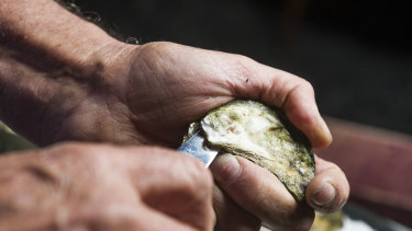 Step one: Slide your oyster knife in the hinge of the oyster. Wiggle gently.