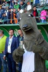 Bohemian Praha's kangaroo mascot.