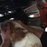 Jackson, a five-month-old Cavalier King Charles Spaniel, was rescued from an electric reclining chair using the 'jaws of life'.