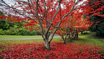 How to create autumn splendour in your garden no matter its size