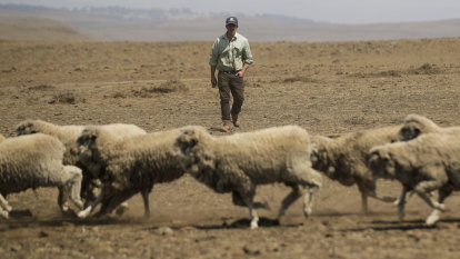 The cost of drought - and it's just going to grow
