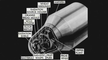 A drawing of America's Biosatellite I, the spacecraft that crashed in the WA outback.