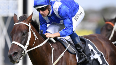 One to go: Winx continued her winning streak with a fourth success in  the George Ryder Stakes at Rosehill last Saturday.