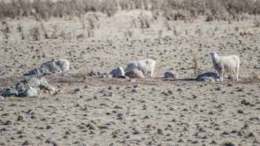 The drought is hitting hard in outback Queensland where some areas have been drought declared since 2013.