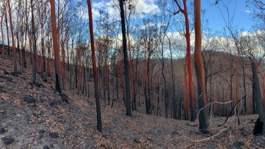 Rainforest decimated in Mt Barney National Park. 'It was like sticks out of dust,' said Innes Larkin.