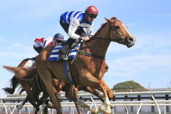 Chat is gets to his best trip of 1400m in the Carrington Stakes at Randwick on Saturday.