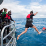 Swimming with Whales program to stay at Hervey Bay