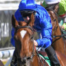 Pandemic another star in Godolphin's three-year-old ranks