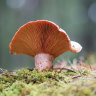 It's mushroom season! Consider this your guide to fungi foraging