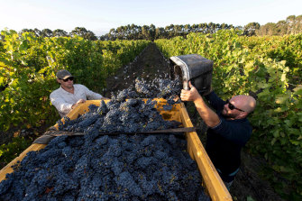 Voyager Estate celebrated its 40th anniversary last year and in 2020 will have 40 hectares of its vineyards in Margaret River, about a third of their total holdings, certified organic.