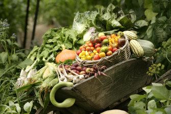 Some of the produce at The Diggers Club, which is selling more seeds as shoppers face empty supermarket shelves,