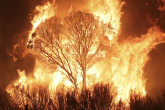 A tree catches fire in Bumbalong.
