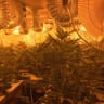 More than $8m in assets frozen in cannabis grow house police investigation