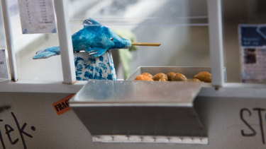 Miniature dolphin jam dispenser and doughnuts in the Olympic Doughnuts model.