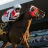 Kirwan's Lane turns into a winning machine for O'Shea