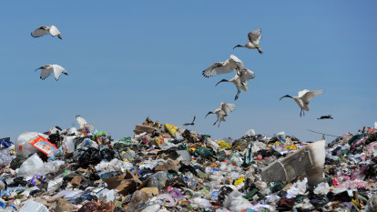 Job boost expected from $600m recycling scheme as 2024 export ban looms